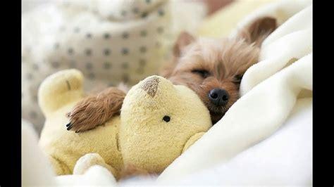 Cute Sleeping Baby Animal Pictures   www.pixshark.com