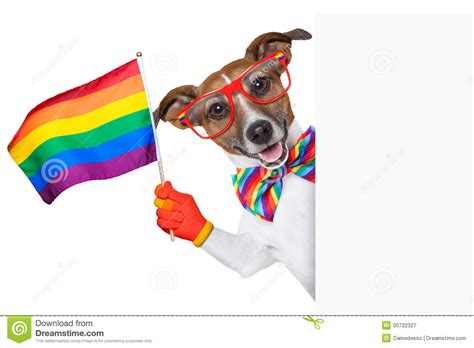 puppy pride pride royalty free stock photography image 30722327