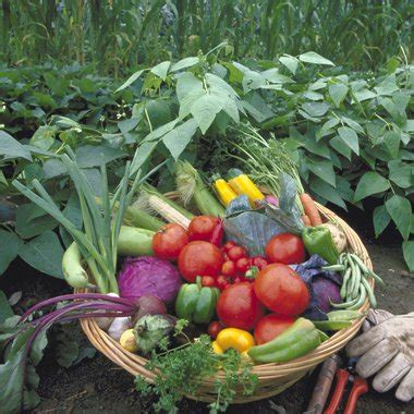 When To Harvest Fruit And Vegetable Garden