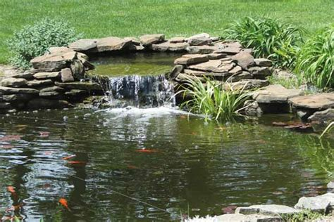Awesome Backyards Ideas Build The Ultimate Turtle Pond