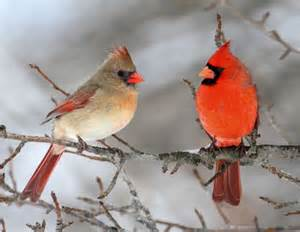 chilly days for snow birds the effects of the falling