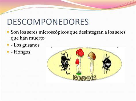 cadena alimenticia acuatica descomponedores concepto la cadena alimenticia es el traspaso de energ 237 a