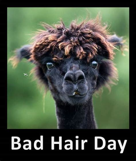 Bad Hair Day Meme - funny bad hair day