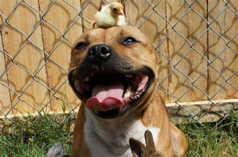 imagenes de animales varios amor entre animales amistad animales petdarling com