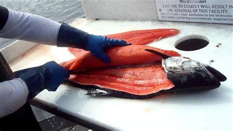 Maguro King Master Ii Sudah Laku capt alaskan king salmon fillet master funnycat tv