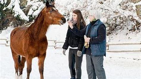 pferde suchen ein zuhause pferde in not tierschutzhof pferde in not fanden ein zuhause