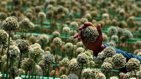 importir benih bawang minta kelonggaran