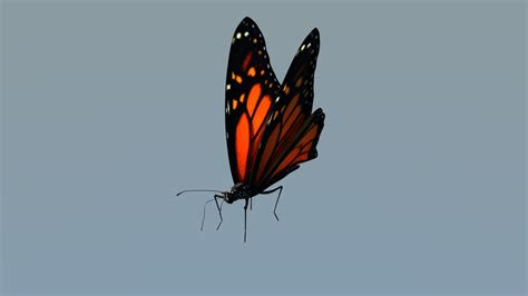 3d Blend Animated Butterfly Monarch Butterfly 3d Animation