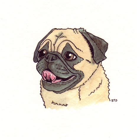 drawings of pugs pug slope 187 drawings