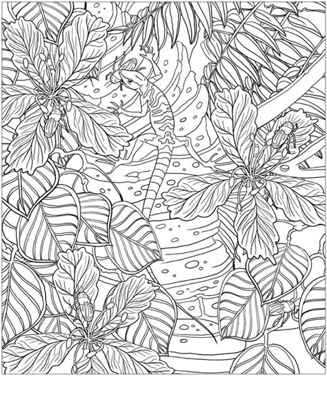 coloring pages for adults amazon adult coloring pages patterns coloring pages for adults