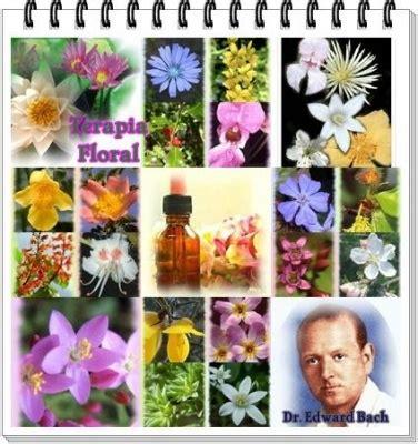 imagenes flores bach las flores de bach tratan de resolver problemas