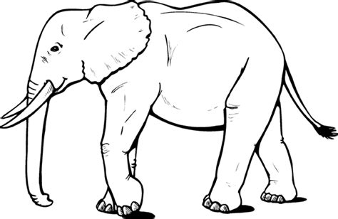 coloring page of african elephant dumbo the elephant coloring page free printable 9005