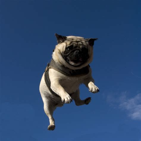 pug no 301 moved permanently