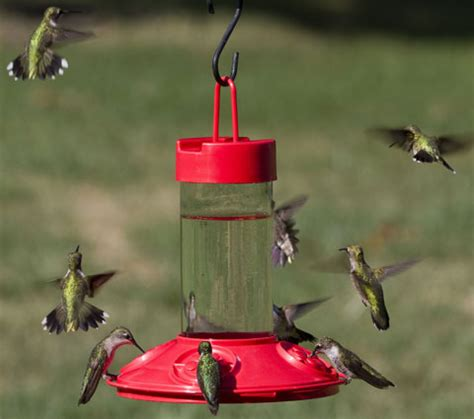 how to attract hummingbirds guaranteed to attract lots of