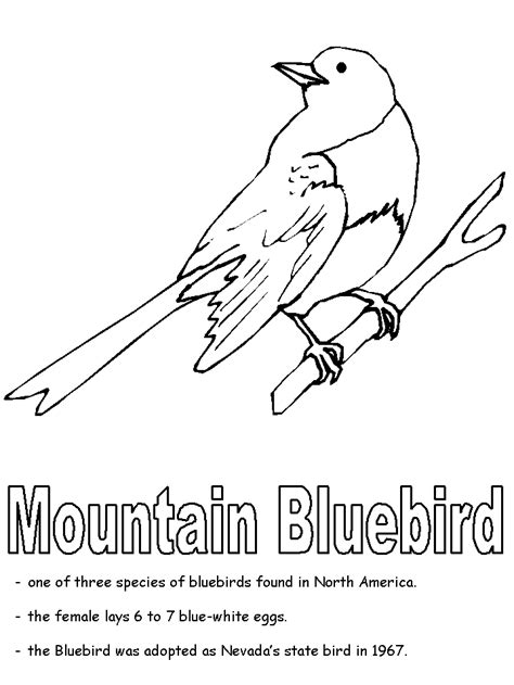 nevada map coloring page free coloring pages of labeling the teeth