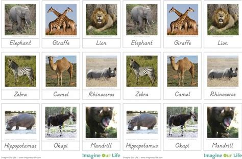montessori printables animals animals of africa for the montessori wall map quietbook