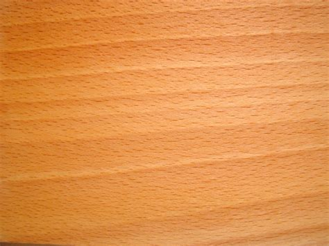 unterschied buche kernbuche buchenholz