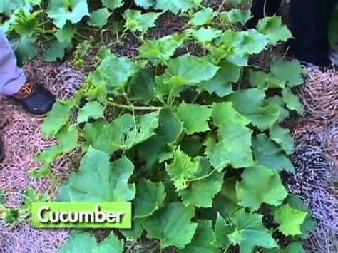 Vegetable Gardening In Central Florida Food For Florida Pre Registration Food For Florida