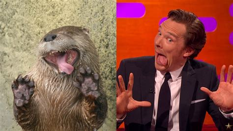Cumberbatch Otter Meme - benedict cumberbatch makes hilarious otter faces video