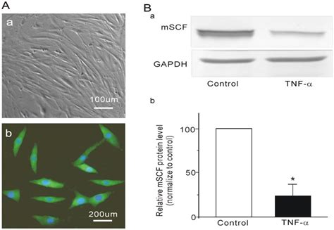 hill pattern analysis effect of tnf α on mscf expression in cultured intestinal
