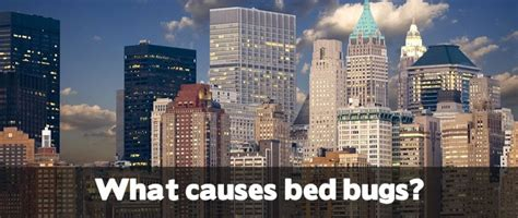What Causes Bed Bugs To Come by Pin Bed Bug Eggs And Nymphs Hiding Places Bites On