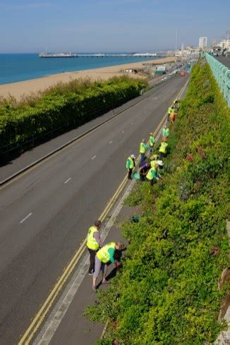 building green promoting green roofs  living walls