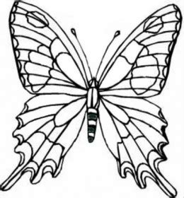 realistic butterfly coloring pages wild animals kids coloring pages free colouring pictures