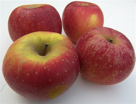 Apple For S apple variety reviews eat like no one else