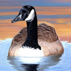 canada goose facts, information & photos american expedition