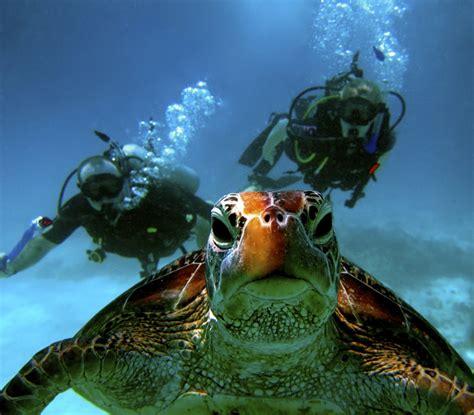 padi dive scuba diving in port douglas blue dive