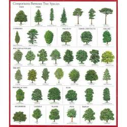 tree types comparisons between tree species good education pinterest