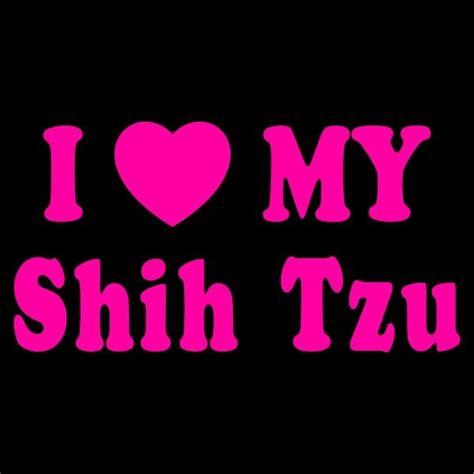 how is my shih tzu i my shih tzu shih tzus