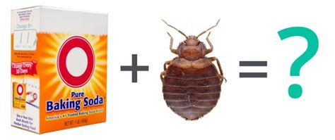 does salt kill bed bugs faq can baking soda kill bed bugs