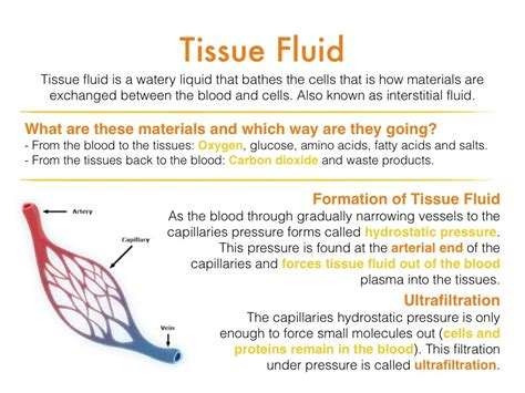 How Is A by Tissue Fluid 13 6 Revision From A Friend