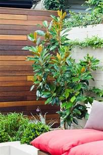 Flowering Shrubs For Shade - magnolia little gem burke s backyard