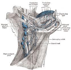 jugulodigastric lymph node wikipedia