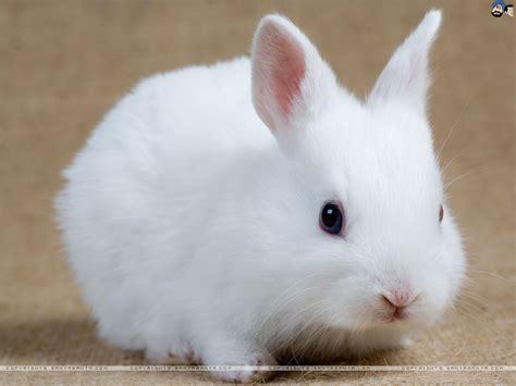 rabbit images free rabbits hd wallpaper 1