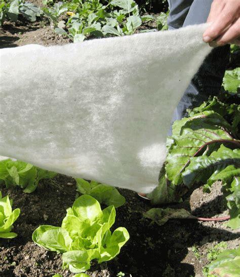 schafwolle im garten frostschutzvlies aus schafwolle 1a qualit 228 t baldur garten