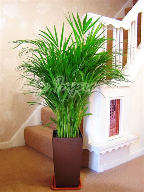 green home decor  cleans  air top eco friendly