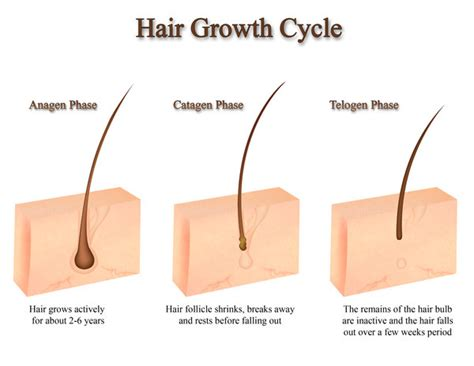 folliculitis cause pubic hair to grow sideways and in layers benot 233 blog