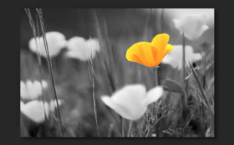 add color to black and white photo combine black and white with color in a photo adobe