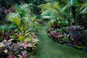 bromeliad garden in hawaii noel morata photography