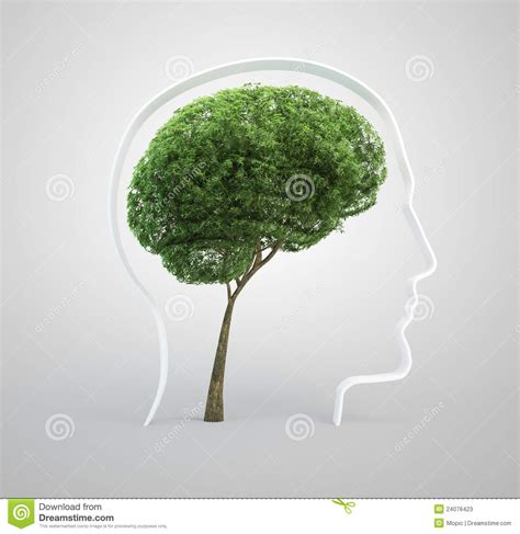 brain tree light up brain tree human stock photos image 24076423