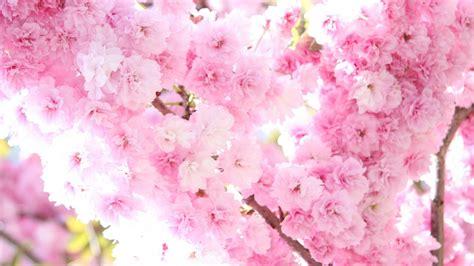 sfondi desktop primavera fiori primavera sfondi 46 immagini