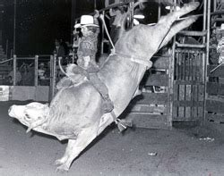 gene wilder riding bull 50 years of living western brought to you by cavender s