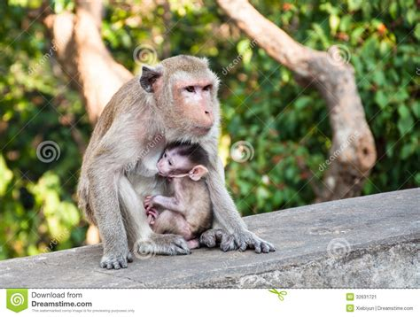baby monkey feeding time monkey feeding baby stock image image 32631721