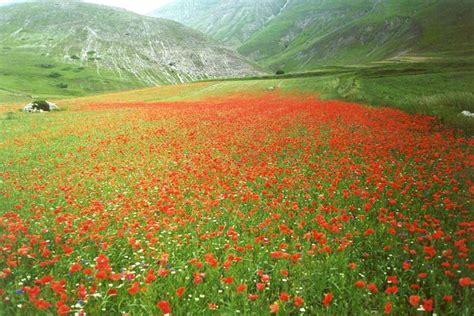 sfondi giardini fioriti giardini fioriti pi 249 belli mondo foto 27 40