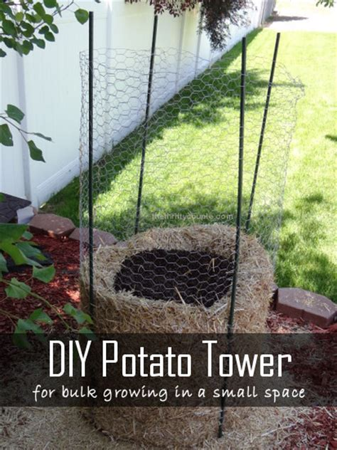 how to build a potato tower for small space growing 3 types