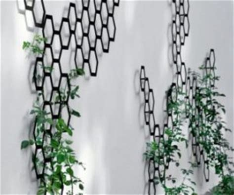 Train Murals For Walls climbing plants that give your home a new look
