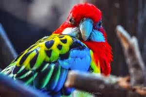 most colorful birds 19 of the world s most colorful birds